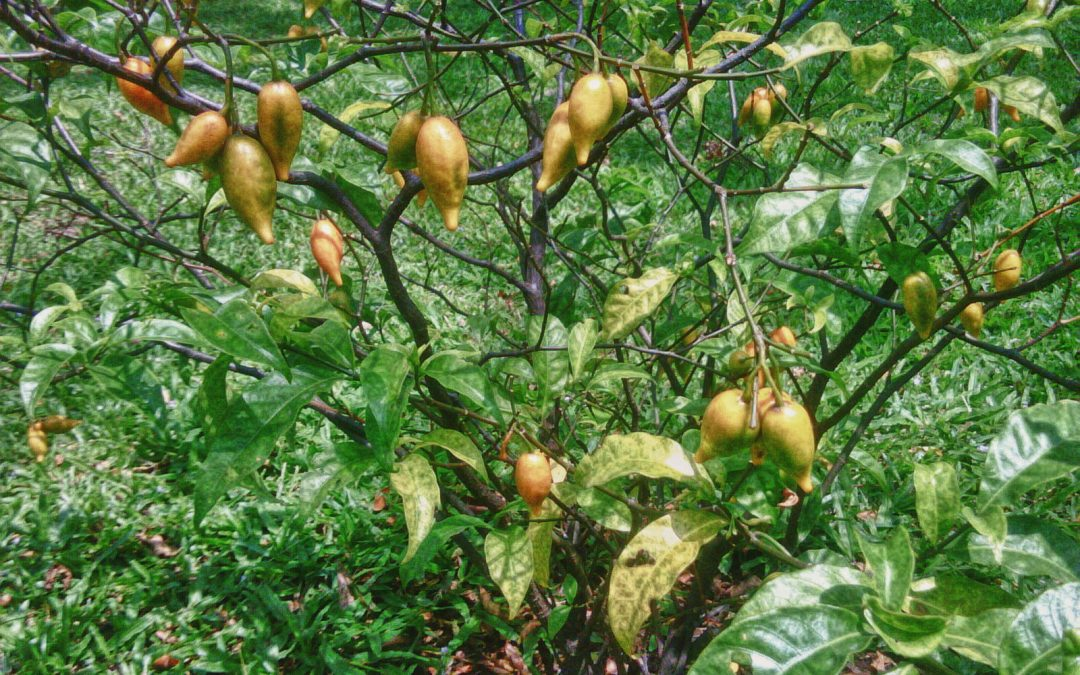 Ibogaine: The Road To Recovery
